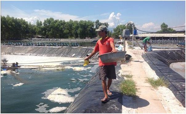 139 doanh nghiệp bị thu hồi sản phẩm phục vụ nuôi trồng thủy sản